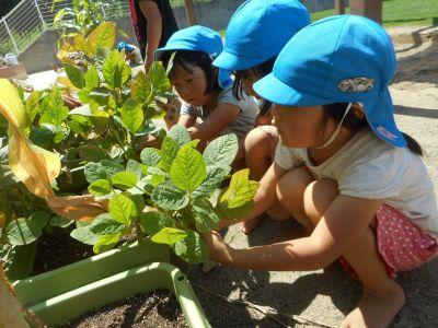園庭での外遊びや野菜を育てたりなど食育活動も大切にした社会福祉法人の認可保育園